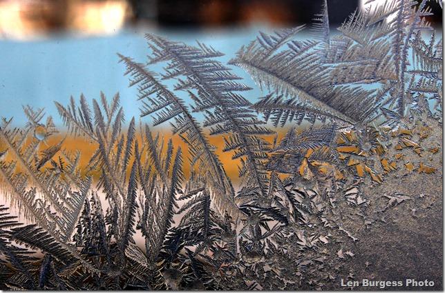 IceCrystals1-24'13_5423