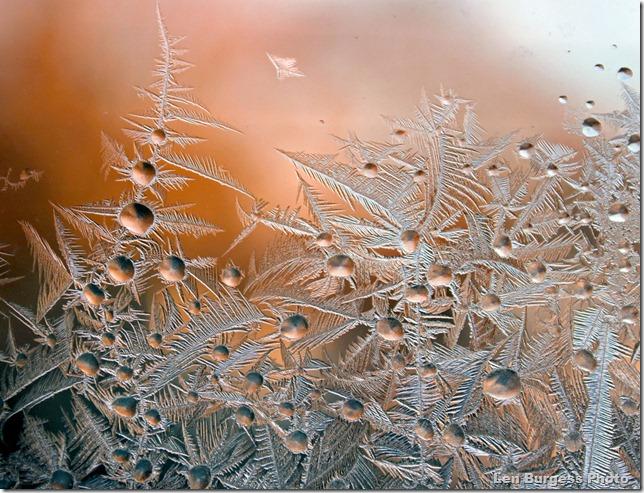 IceCrystals1-24'13_5448
