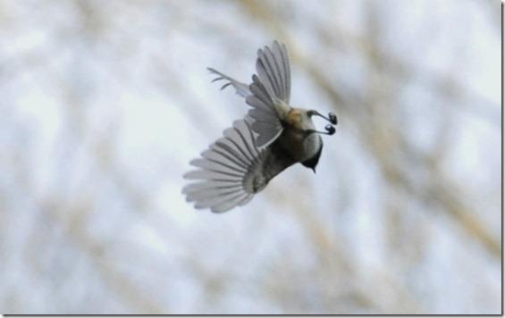 2013JAN BIRDS D700 70-200mm 032
