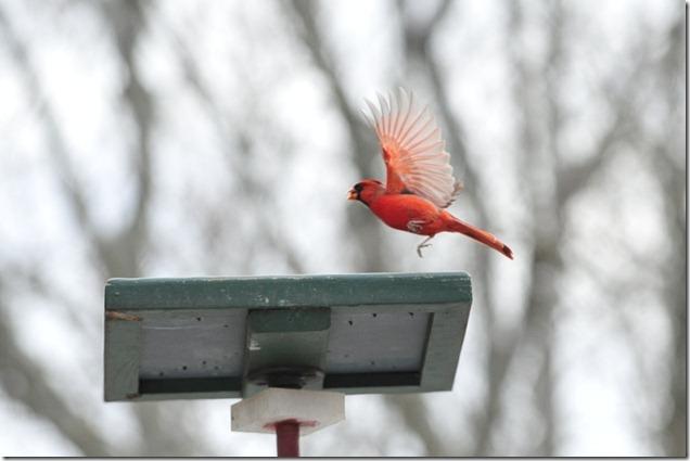 2013JAN BIRDS&TURBINES 063