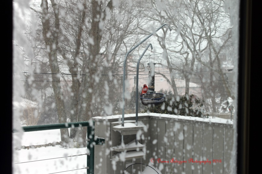 February 9, 2013 a pretty Red Cardinal on my feeder
