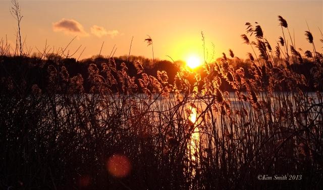 Niles Pond Brace Cove ©Kim Smith 2013