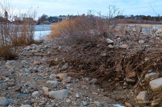 Niles Pond Brace Cove Storm Damage -4 ©Kim Smith 2013.