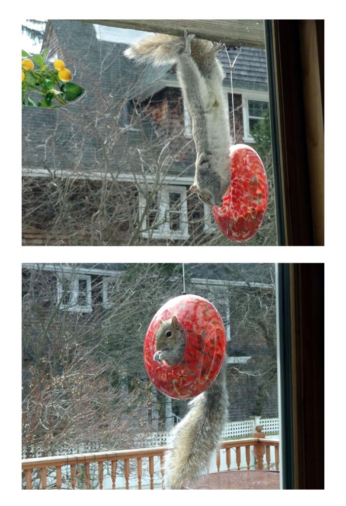 cynthia kennedy sam squirrel feeder