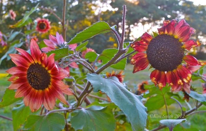 JoeAnn Hart Garden -2 ©Kim Smith 2013