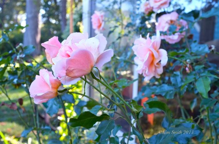 JoeAnn Hart Garden ©Kim Smith 2013