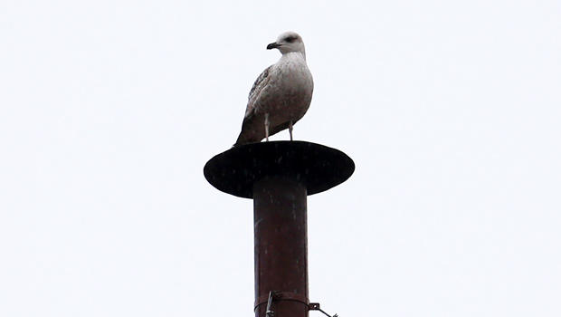 papal_conclave_bird_on_chimney_130313_620x350