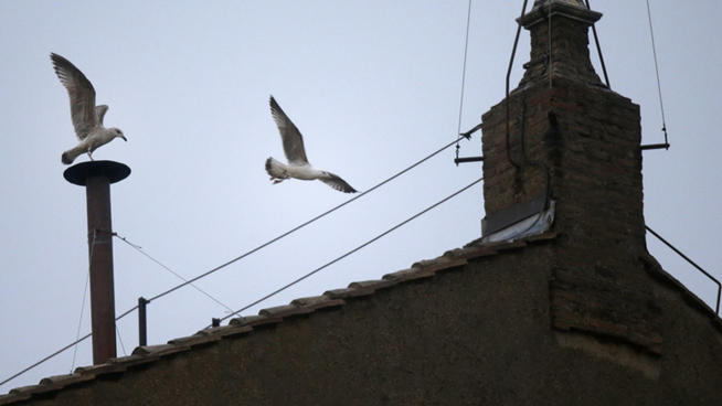 sistine-seagull