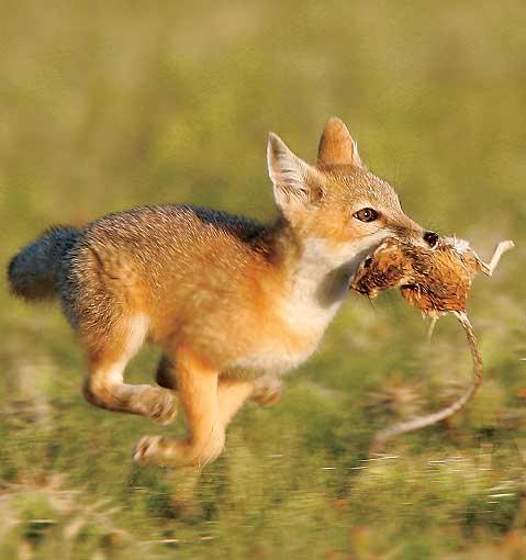 contest_fox1ashx