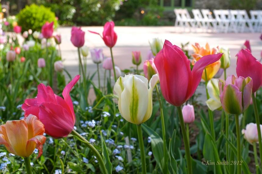 Tulip Garden Willowdale Estate ©Kim Smith2012.