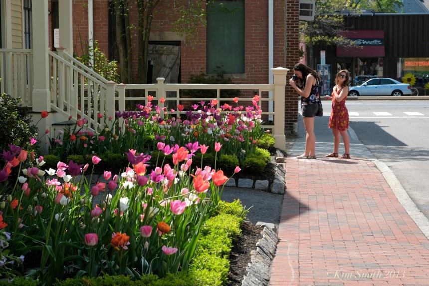 Mary Prentiss Inn spring tulips -1 ©Kim smith 2013