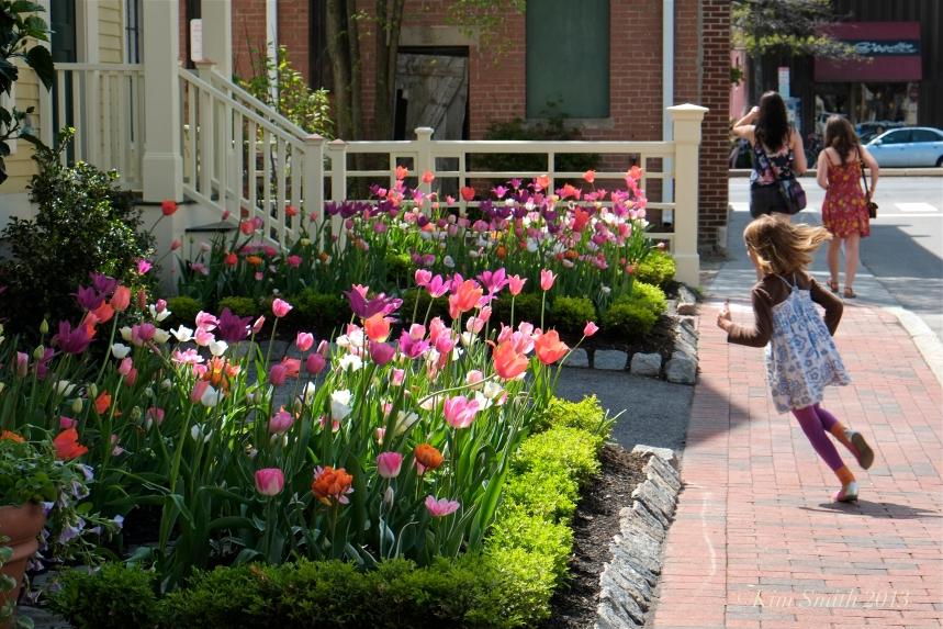 Mary Prentiss Inn spring tulips -2 ©Kim smith 2013