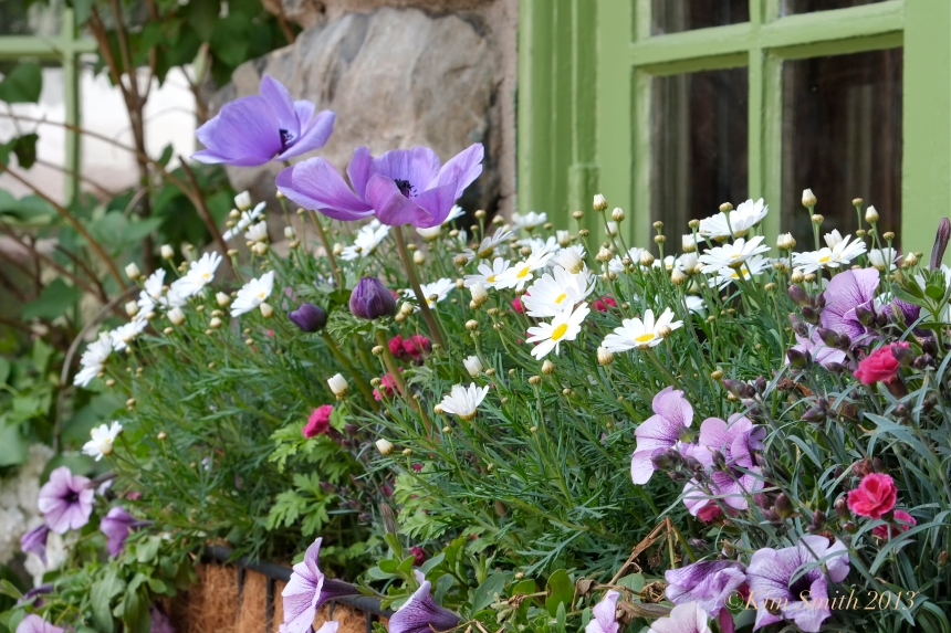 Willowdale Estate Artist Spolight Garden Kim Smith window box anemone ©Kim Smith 2013.JPG