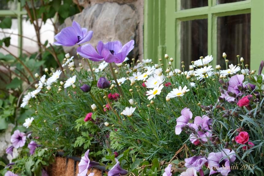 Willowdale Estate Artist Spolight Garden Kim Smith window box anemone ©Kim Smith 2013.JPG