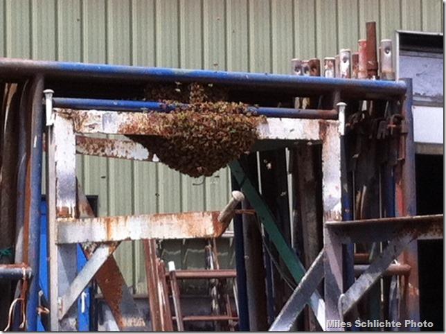 Railways bees