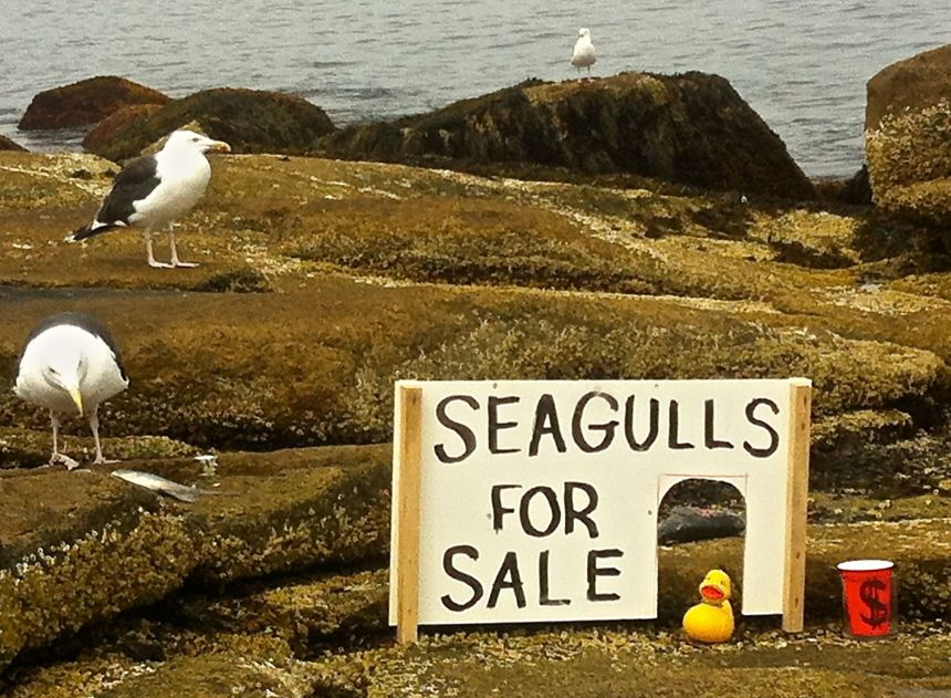 Selling seagulls down by the seashore.