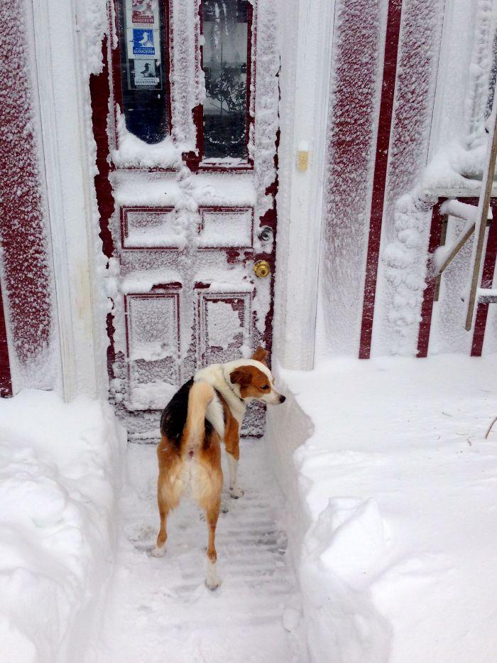 colddog