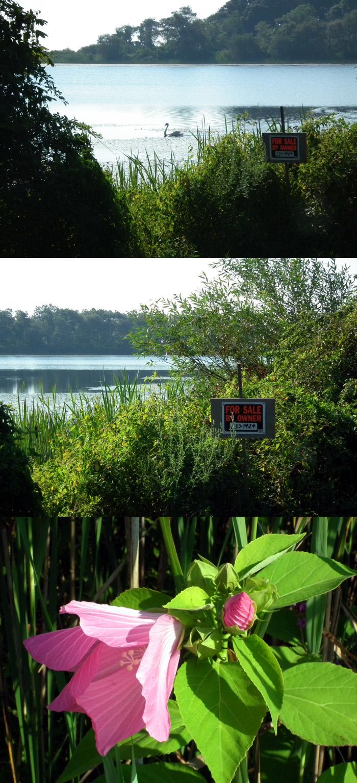 niles pond for sale copy