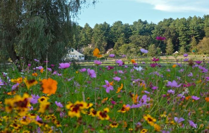 Donovan Wildflower Field & House ©Kim Smith 2013 copy