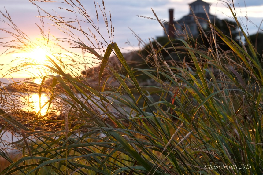 Good Harbor Beach grass © Kim Smith 2013