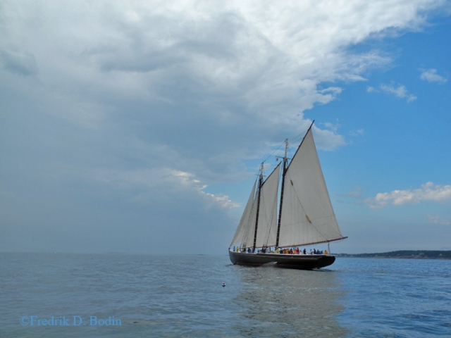 The Gloucester Schooner Adventure, built in 1926, joins the race for the first time in 20 years. She placed 2nd.