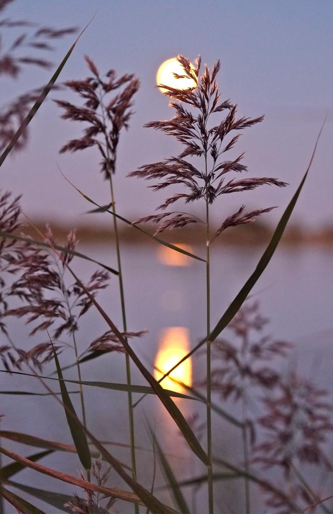 Niles Pond Moon Beams ©Kim Smith 2013