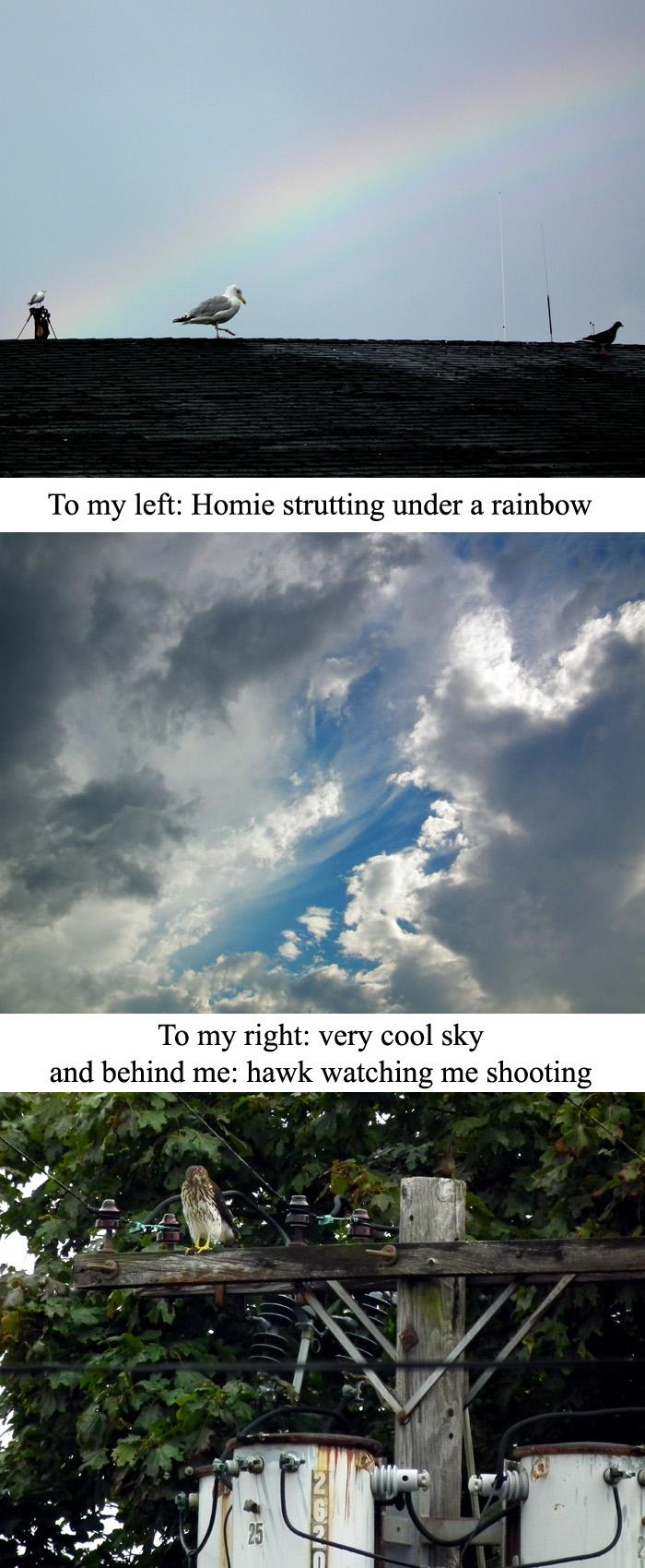 rainbow cool sky and hawk copy