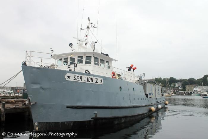 September 10, 2013 Sea Lion V