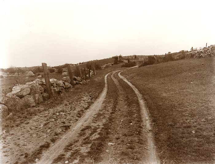In 1914, Dogtown was still pretty bare. What an amazing landscape. I'm sure the Lanesville photographer John I. Coggeshall, leveled his camera and this is the true contour of the land  The tracks in the road look like it's used. I guess they were still raising pigs and vegetables. Nobody owned Dogtown, so why take your enterprise elsewhere, when cleared land with roads were available for free? Perhaps in our future, Dogtown may be used for a similar purpose.