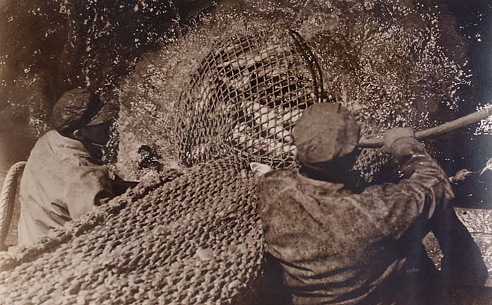 Hauling the net full of cod. The steel dragger is unidentified. Photographer was James H. Goodwin. If anyone knew him, let us know.
