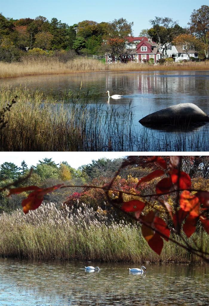 fall niles pond