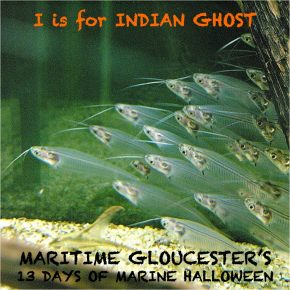 ghst fish