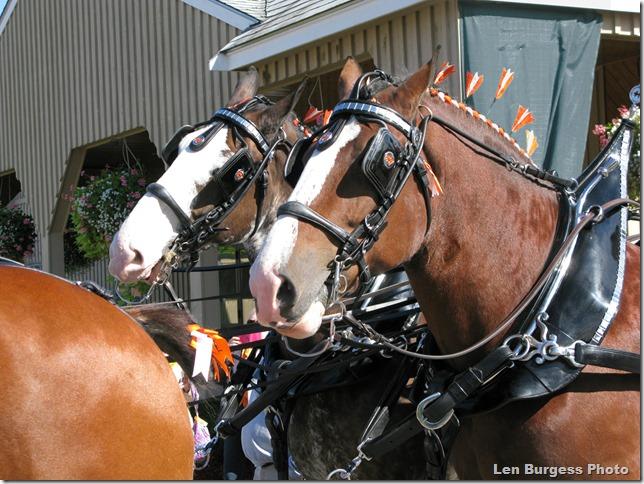 HorseTeam_0864