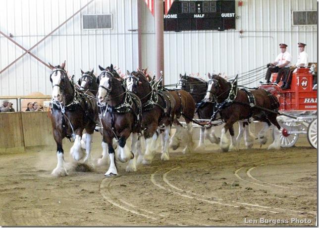 HorseTeam_0897