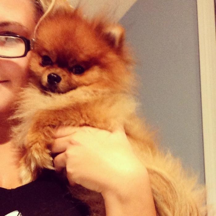 Hannah Willey's Pet's Selfies