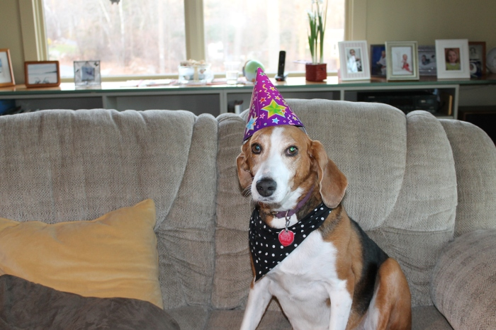 Donna Ardizonni's Rosie at Riley's Bday Party