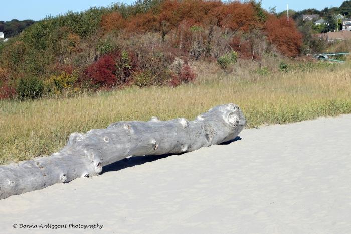 October 1, 2013 Driftwood looks like a sea creature