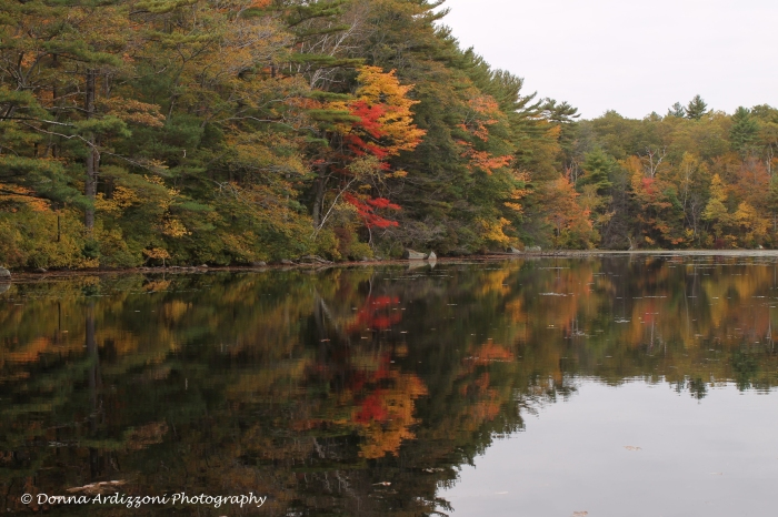October 15, 2013 bushwell pond