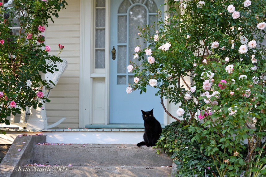 Front Door Cosmos Kitty ©Kim Smith 2009