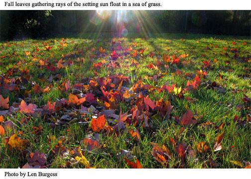 len burgess fall leaves