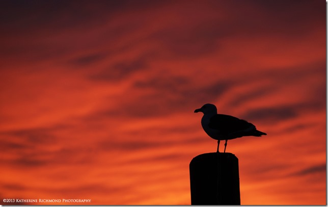 Seagull sunset LRZ