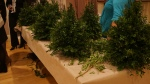boxwood tree party 2013 155