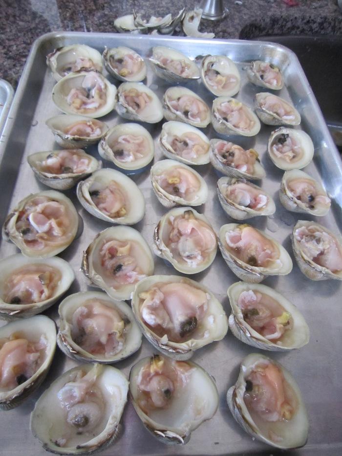clam 7