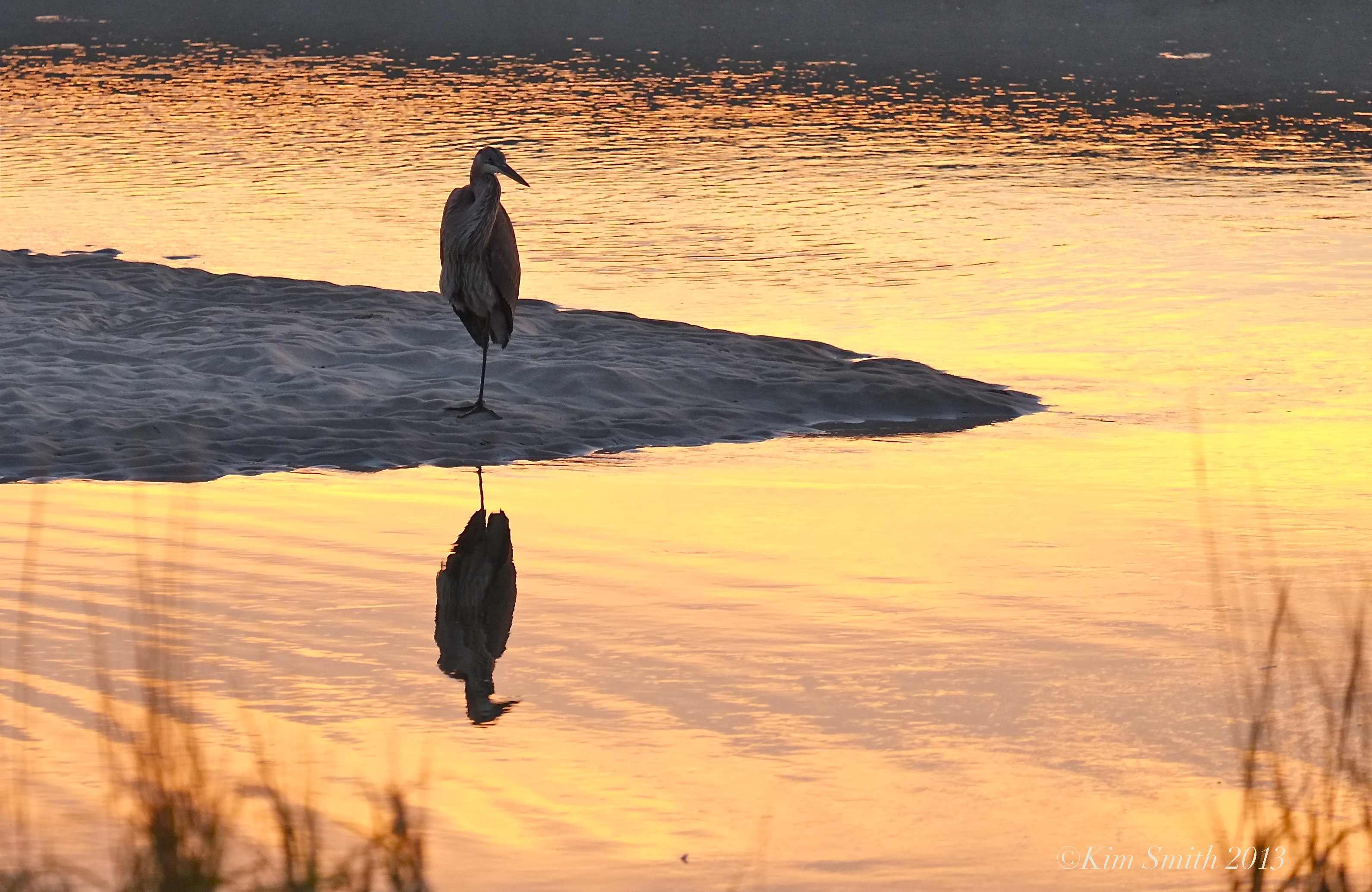 Why does the heron stand on one leg? Habitat and particular lifestyle of the bird 61
