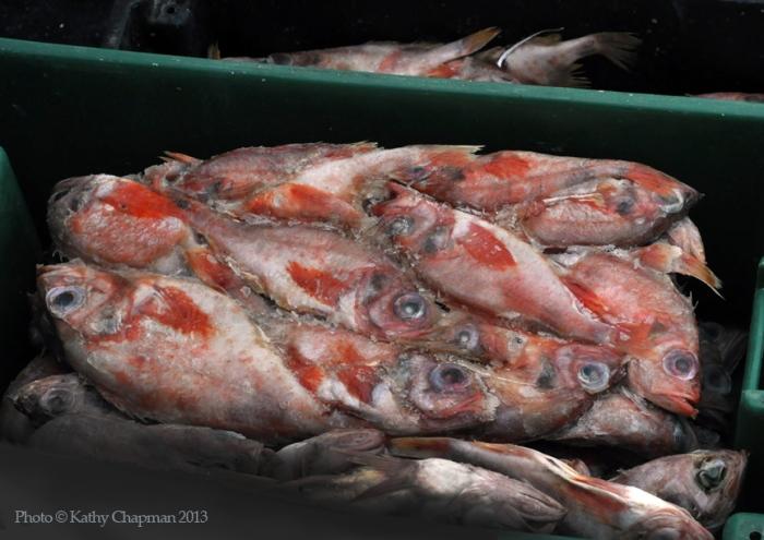 GroundfishBait