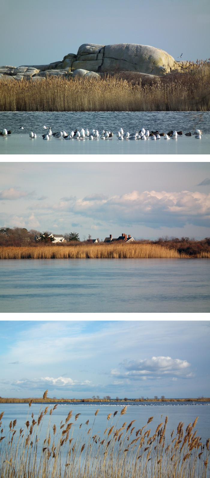 niles pond winter