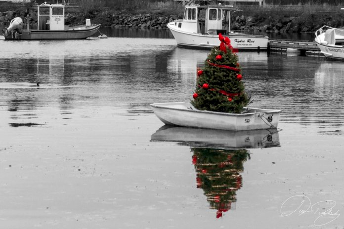The Harbor Gets a Tree