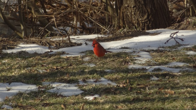 backyard birds 051