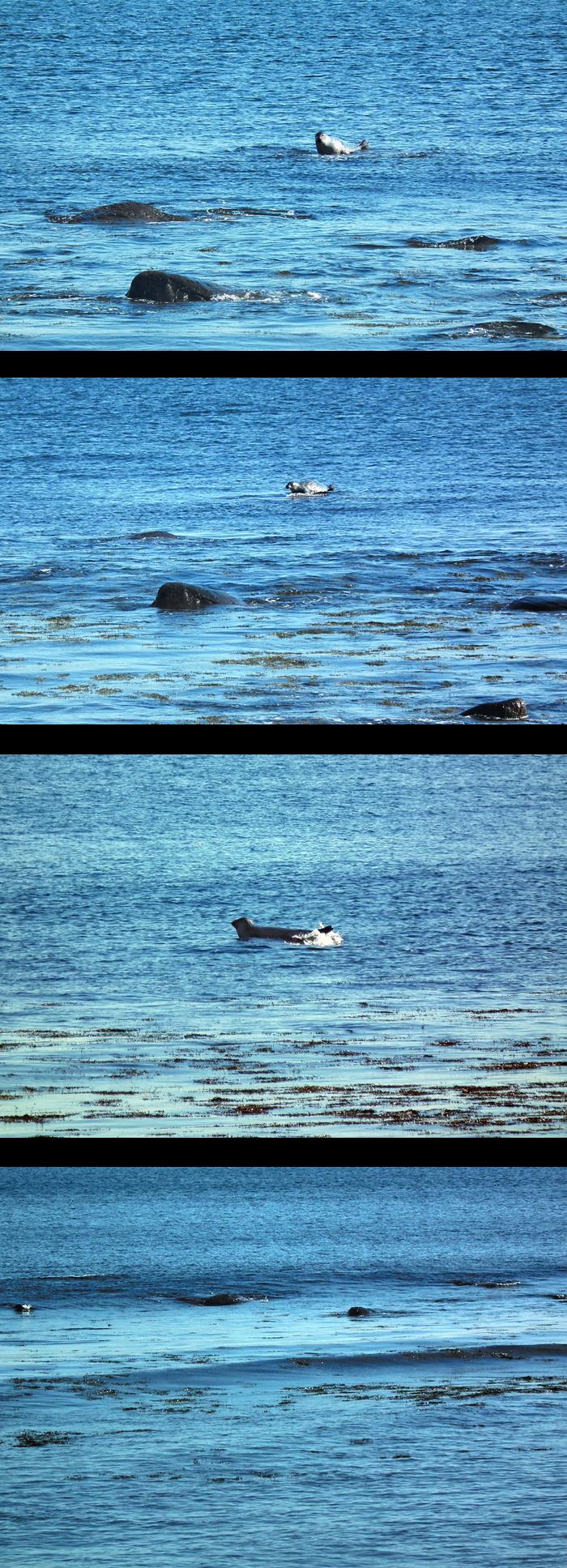 even seals have frustrations
