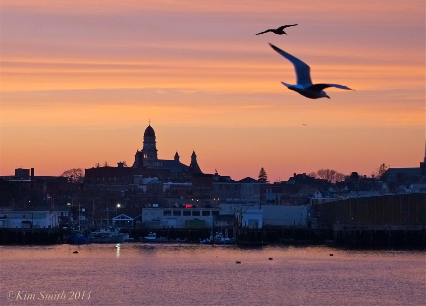 Gloucester City Hall Smiths Cove sunset. seagulls©Kim Smith 2014.